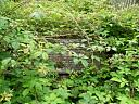 St Clement's Burial Ground, Dingwall   © Highland Buildings Preservation Trust