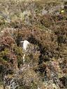Hut circle Sand South (AEMC012): from W looking at stones in N wall segment  by Ann MacInnes  © Ann MacInnes
