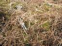 Hut circle Isle Ewe 1 (JAN023): stones in bank   by Anne MacInnes  © Anne MacInnes