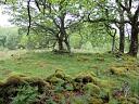 Hut circle Talladale (JAN036): looking N at HC  by Anne MacInnes  © Anne MacInnes