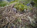 Knockfarrel  by Joan Lynn  © Highland Council